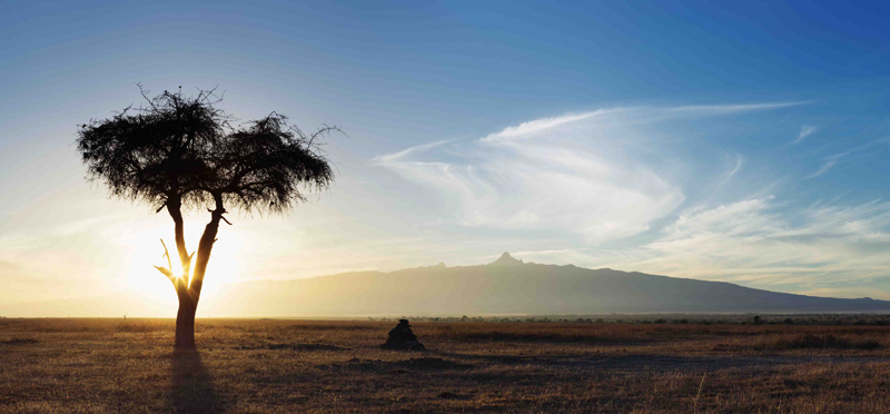 Acacia tree at sunrise with Mount Kenya in the  background. Ol Pejeta Wildlife Conservancy.Kenya