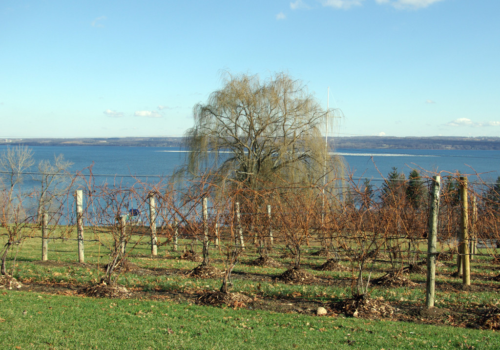 Goose Watch Winery (by the author, December, 2009)