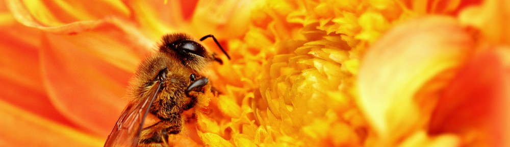 Honey Bees and Drones
